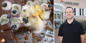 Mellan 23 juli och 23 pågår det som kallas för rötmånad. Jonas Toljander är mikrobiolog på Livsmedelsverket.
