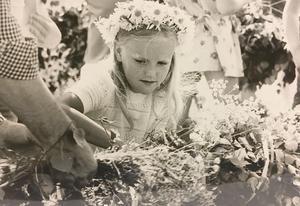 22 juni 1975. Karin Paulsson, 7 år, var en av dem som utnyttjade det tillfälliga tillståndet att få plocka blommor på Björnön. Blommorna räckte både till en krans i håret och till att smycka stången med. Foto: Lasse Höglund/VLT:s arkiv