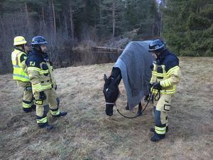 Hästen blev något nedkyld men klarade sig bra efter att ha hamnat i ån.