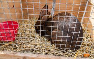 Kaninutställning var också på plats.