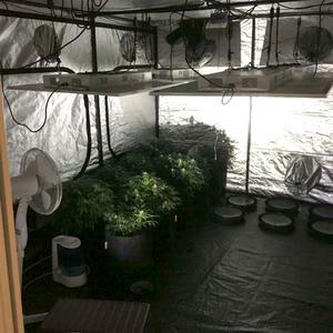 Inne i tältet fanns flera plantor och utrustning för odlingen. Bild: Polisen