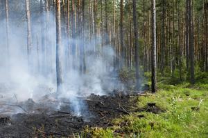 Bild från en av de senaste dagarnas skogsbränder som härjat i Västmanland. Foto: Henrik Montgomery / TT