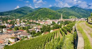 Besök vingårdarna i Alsace.