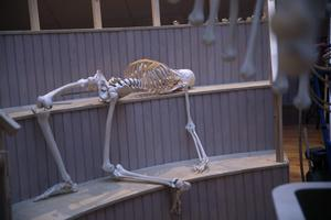 En anatomisk teater har byggts upp i ena änden av lokalen. När LT är på besök finns ännu inga levande åskådare på läktaren.