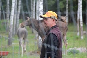 Älgarna är tama och ofarliga, enligt  ägaren Daniel Svensson.