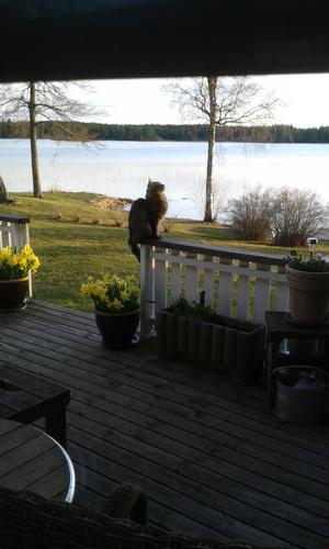 Bosse spanar på fiskmåsen. Foto: Karin Norén