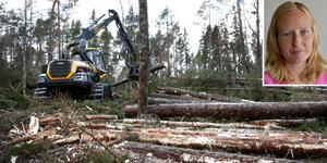 Karolina Johansson, skogskonsulent på Skogstyrelsen, svarar på frågor gällande stormen Alfridas eftergifter.