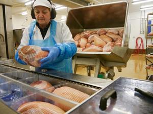 Samira Tatarevic packar rimmade skinkor i plast. När du läser det här är de säkert redan tillagade och griljerade.