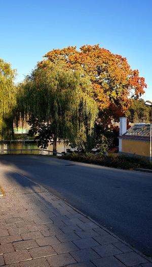 """""""Hösten är så vacker även i Södertälje!"""", skriver Eva Ness som tagit bilden. Bild: Eva Ness."""
