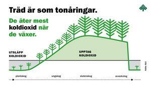Skribenten menar att orörd skog är bra för klimatomställningen vilket många forskare sätter emot.