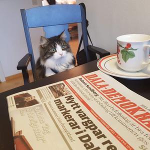 Efter att ha studerat dagens upplaga av Dala-Demokraten undrar Bosse när han får frukost. Den trevliga bilden är tagen av Ulla Björke, Borlänge.