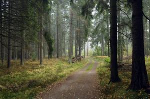 Tyvärr är det inte bara naturen i Fagersta som liknar min morfars uppväxt. Foto: Hasse Holmberg.