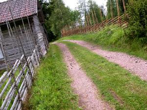 För över 100 år sedan brukades stora arealer åker, hackslogar och skogsbeten i Ljusbodarna.  Foto: Arkiv/Christian Larsen.