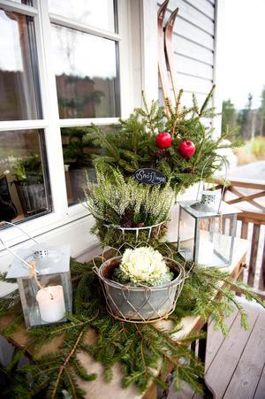 De knallröda vinteräpplena har Maria fått av sin mamma som bor i Sollefteå.