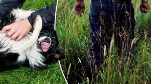 Mannen hade inte stulit en båt, menade han. Han hade lekt med en hund. Mannen och djuret på bilden har ingenting med artikeln att göra. (Montage)