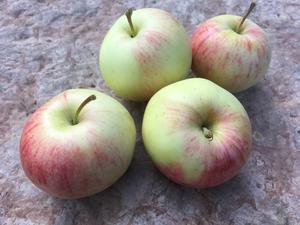 Nånöäpplena som de såg ut när de skördades tidigare i höstas.