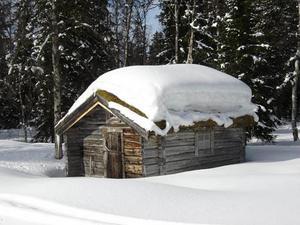 Bilden är tagen i Ankarede och föreställer en gammal fäbodstuga i vinterskrud. Fotograf är Tove Nilsson-Mäki, skriver Jan Castberg.