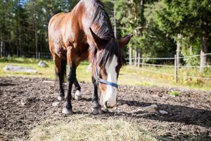 Alla hästar har rätt till ett bra hästliv, oavsett inom vilket område de används, menar Gunnel Söderback.