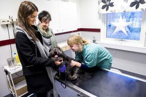 Tua Solax och Ruth Solax har fått hjälp med skotträdda hunden Rufus av veterinär Sarah Jensen.