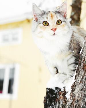 100) Detta är Sibel när hon är i äppelträdet. Sibel är full med kärlek och bus. Älskar att klättra i träd och gärna så långt upp hon kommer Foto: Frida Nilsson