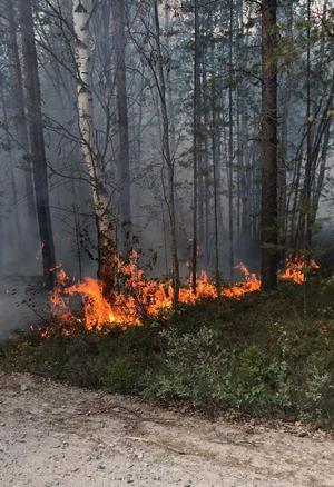 Räddningstjänsten har bekämpat kilometervis av öppna lågorFoto: Kurt Holm/Almunge brandstation