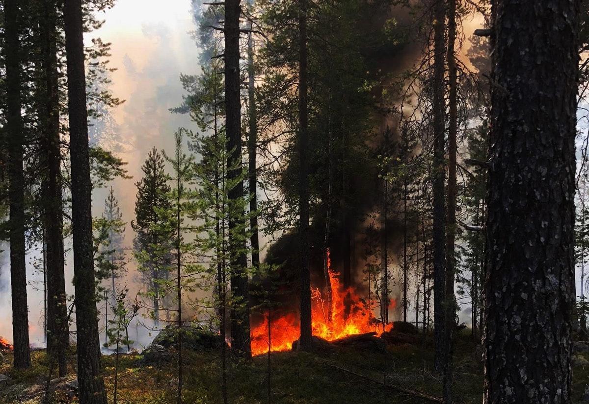 Karta Over Skogsbrander I Sverige.Brandomradet Storre An Tidigare Kant Omkring 8 500 Hektar Brinner