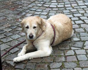 Ett riktigt hundväder var det i Ludvika på lördagen.