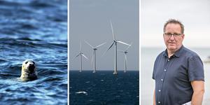 Bengt Nises, ordförande i föreningen Vision Jungfrukusten, vill att de planerade vindkraftsparkerna längs Gävlekusten stoppas eller åtminstone minskas ned i storlek. Snurrorna beräknas bli mellan 290 och 350 meter höga beroende på placering.