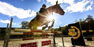 Fyra regionala ridtävlingar i Stockholmsområdet ställs in under de kommande tre veckorna.
