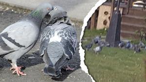 Fågelmatning har orsakat en grannfejd i Härnösand.