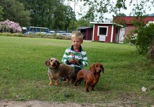 Det ska börjas i tid och femårige Viktor Hagblom Englund från Älvsjö har inga problem att klara av taxarna 12-årige Oliwhistars Herrculhez