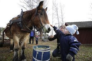 Nilas Alcén hälsar på hästen Oden, pappa Fredrik hjälper till.