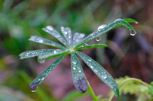 Efter en regnig dag i Västerås passade jag på att ta kort på ett fint blad med vattendroppar på.