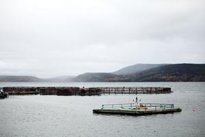 Hemsön. Här finns en av flera fiskodlingar där ägarna vill utöka produktionen.