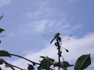 Med så små nätta vingar genom livet, behövs en paus ibland, som i vårt körsbärsträd!