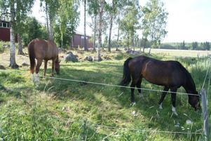 """""""viktig ungdomsverksamhet"""". Storvik-Ovansjö Ridklubb, Stork, har 280 ridande medlemmar och 39 hästar i stallet."""