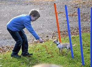 Klurig bana. Felix Koch tyckte att det var lite svårt med agility. Hunden Elvis följde inte riktigt med i slalombanan som Felix hade tänkt sig.