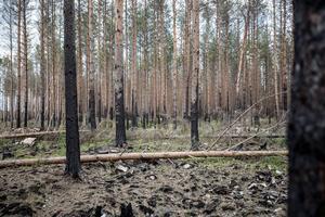 Ett år efter branden i Västerfärnebo.