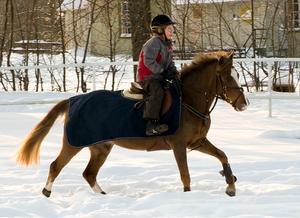 Maya 9 år rider sin ponny Castle Farm Kate - med tungan rätt i mun - i full galopp. Ponnyn kommer från Irland och har aldrig sett snö förut och Maya övervägde länge och väl ifall hon skulle galoppera och var så klart överlycklig när hon vågade släppa fram henne i en underbar galopp.