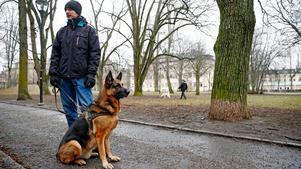 Schäfern Krut och husse Johan Skog efterlyser båda fler hundparker i centrala Örebro för att hundägare ska kunna släppa sina hundar lösa under kontrollerade former.