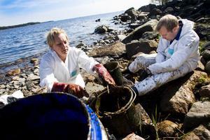 Karin Hedberg och Robert Näslund använder murslevar för att skrapa bort olja från stenar.