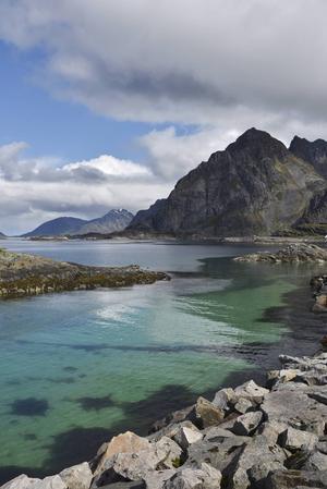 Djupturkosa vattenbryn är en vanlig syn i Lofoten.   Foto: Jesper Zacharias