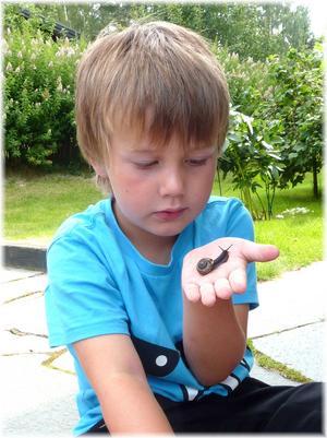 Loke, 5år, studerar naturens under på nära håll. Att lära sig vara rädd om djuren redan som liten är viktigt !!