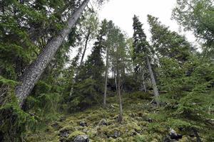 Från Ekopark Fjätfallen. Foto: Nisse Schmidt