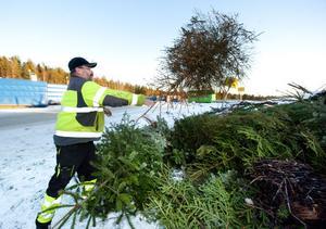 Roland Björk, samordnare på Fågelmyra avfallsanläggning, säger sig ha märkt en minskning vad gäller antalet julgranar.