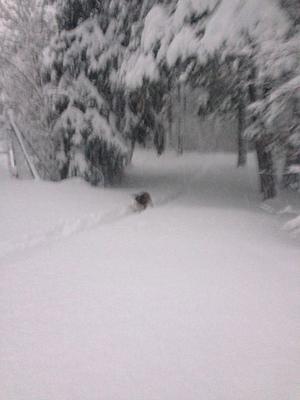 Vinterhund. Foto: Göran Greider.