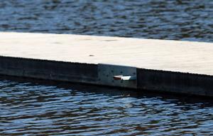 Det är från bland annat från den här öglan som bryggan i Uvbergsviken krupit ur under vårflodens höga vattennivåer.