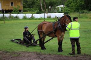 Anna och Claes Karlsson med unghästen Nader som de har fött upp själva.