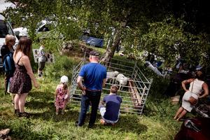 En mindre inhägnad med små lamm blev en storfavorit bland barnen.