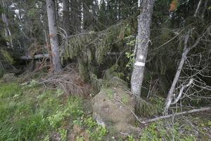 Skogsägare måste ha fått bort stormskadad skog innan den 1 juli, annars riskerar de vitesföreläggande. De träd som fallit i naturreservat och biotopskydd behöver däremot inte tas bort, förutom några få undantag.
